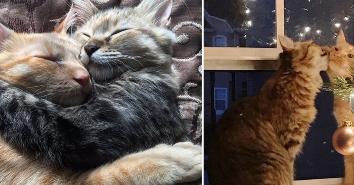 Couple leaves shelter with two cats because these two refused to be separated