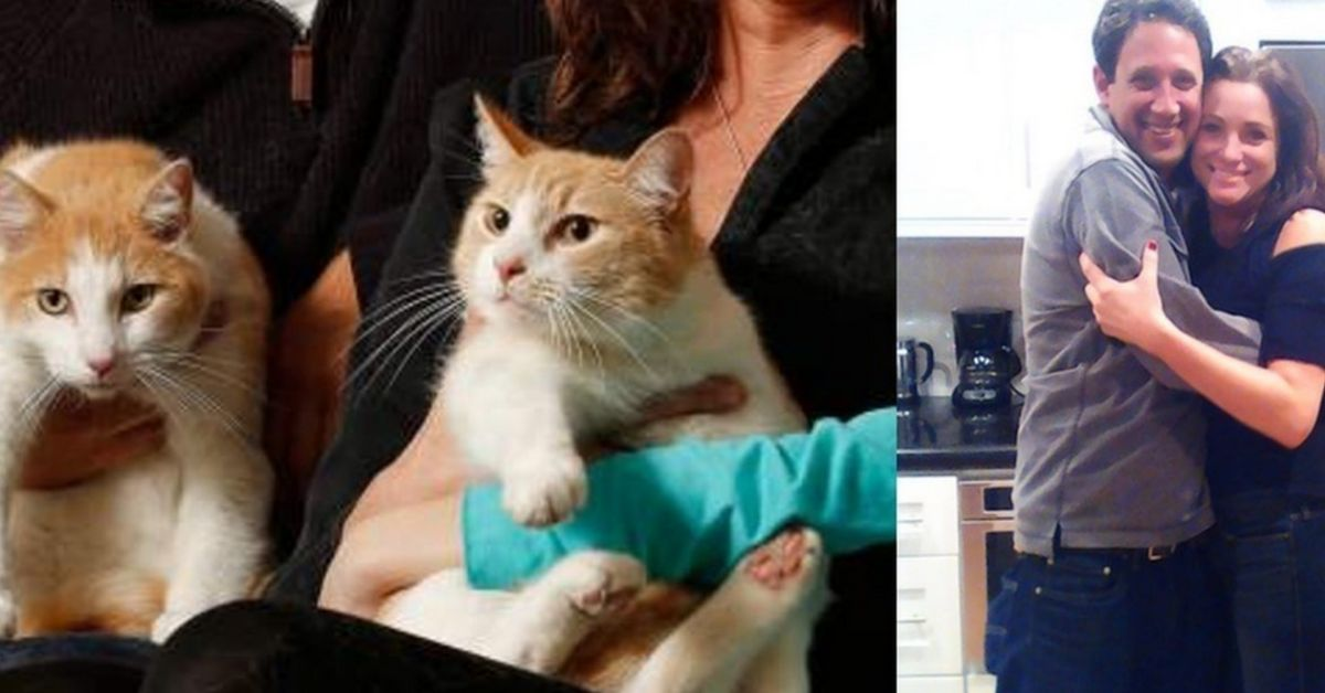 Cat brothers are reunited after years apart when their owners start dating